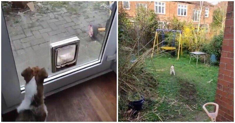 Бесстрашная кошка против самоуверенного пса