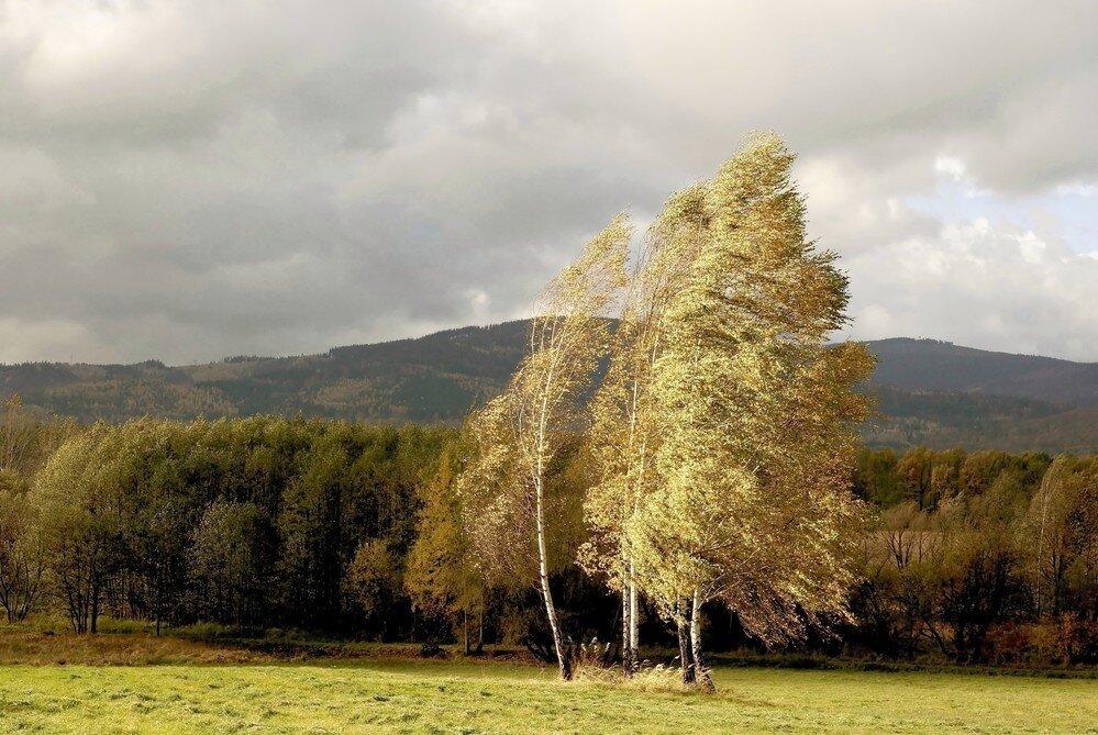 Влияние западных ветров на климат и погоду