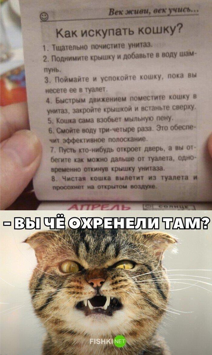 Бедный котя
