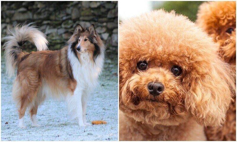 Эксперты показали список самых агрессивных пород собак