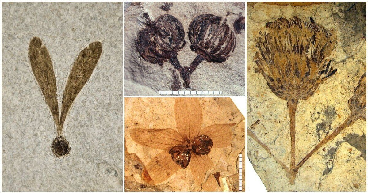 Ископаемое искусство: 20 прекрасных отпечатков растений, которые когда-то жевали динозавры