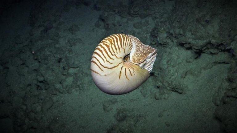 9 потрясающих изображений глубоководной жизни, снятых подводным роботом