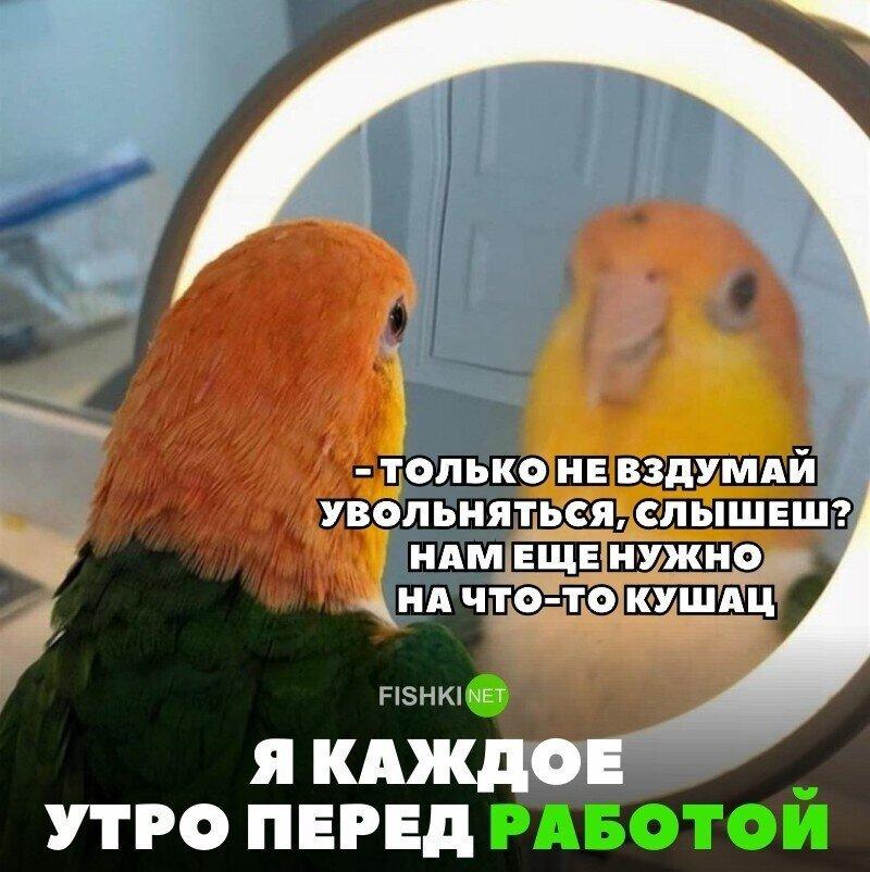 Мемы и смешные картинки субботы