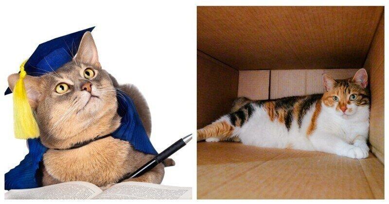 """Коты умеют создавать """"виртуальные"""" коробки"""