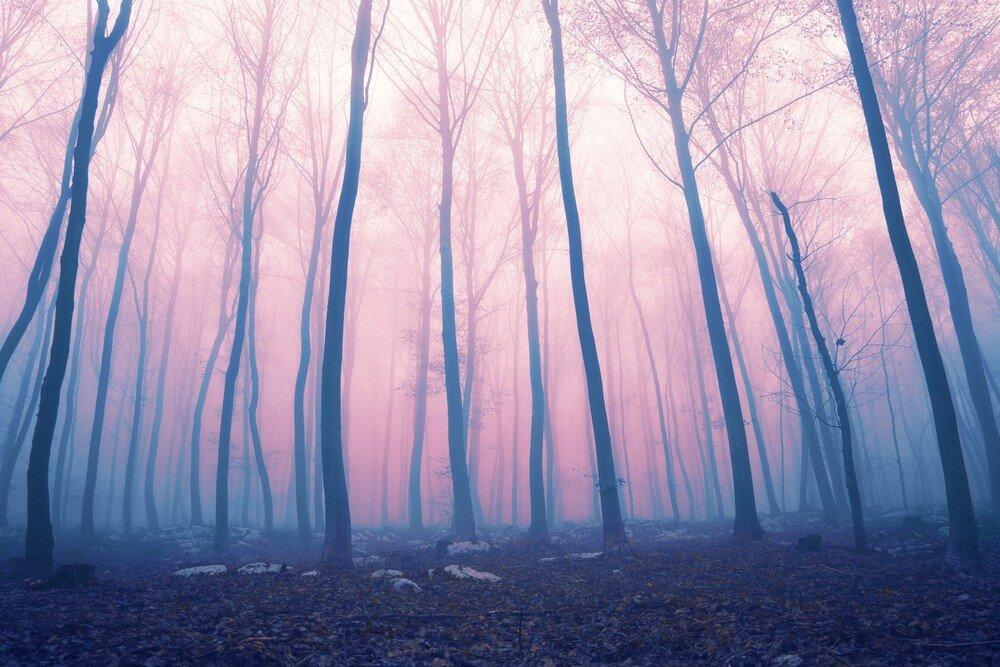Что на самом деле скрывают клубы плотоядного загадочного розового тумана?