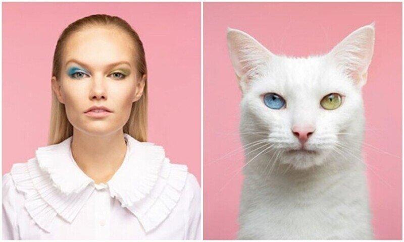 17 фото людей и кошек, которые очень похожи друг на друга