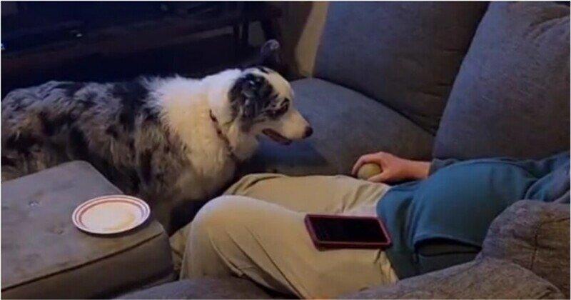 Поскорее бы бросил: муки ожидания пса