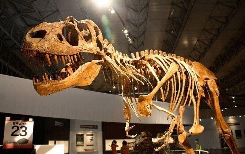 Кости Динозавров — это не кости