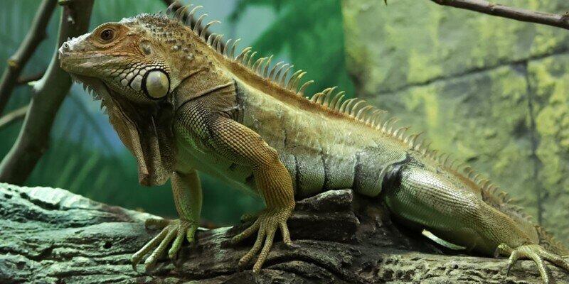 Змеиное сафари: в зоопарке открылся новый павильон
