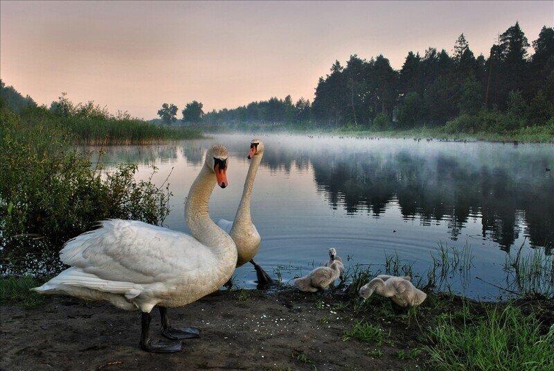 Живописные пейзажи фотографа Игоря Денисова