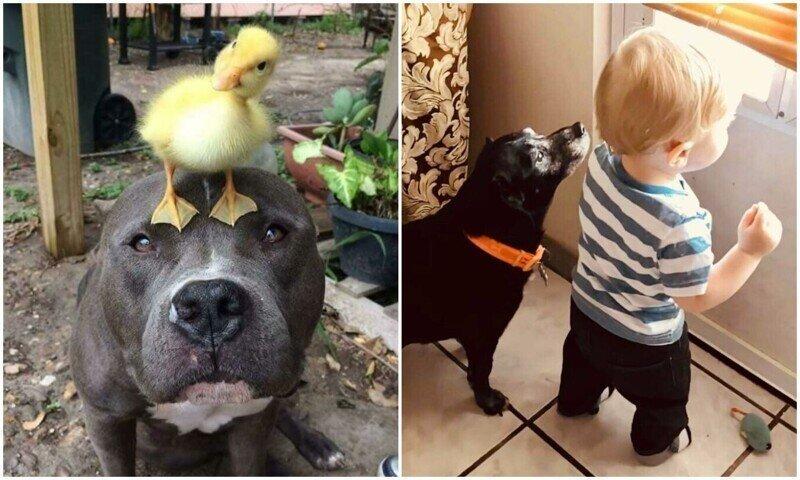 Мы для них - вся жизнь: 20+ фото с собаками, которые греют душу