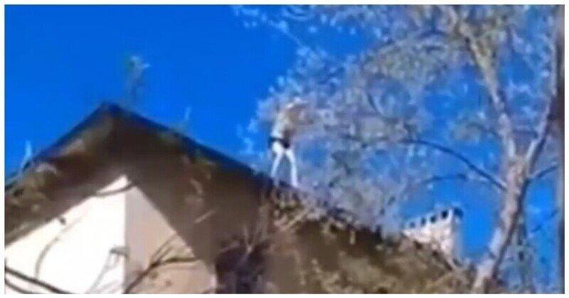 Летающий Володя: пьяный мужчина спрыгнул с крыши дома на дерево