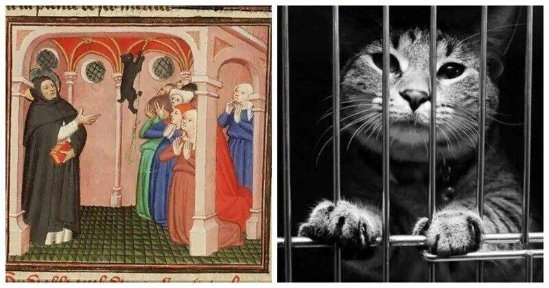 Почему католическая церковь испытывала неприязнь к кошкам