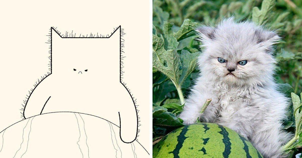 Минималистичные рисунки мемных котов