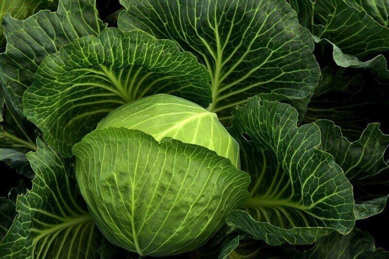 Чем на самом деле полезен популярный овощ
