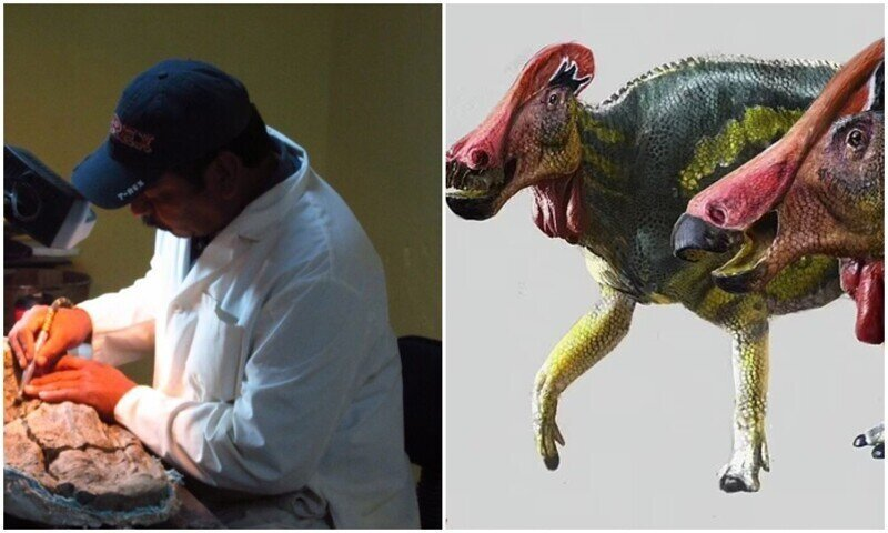 Ученые открыли новый вид динозавра