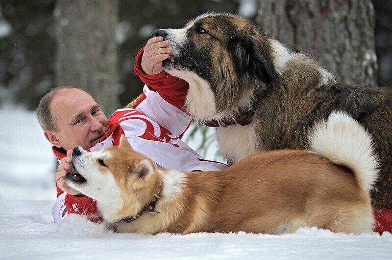 Путин вводит учёт домашних животных, правила их разведения и изъятия у хозяев