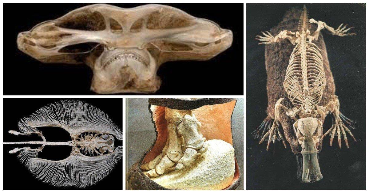 20 обычных животных в необычном ракурсе: разрезы, скелеты, рентген