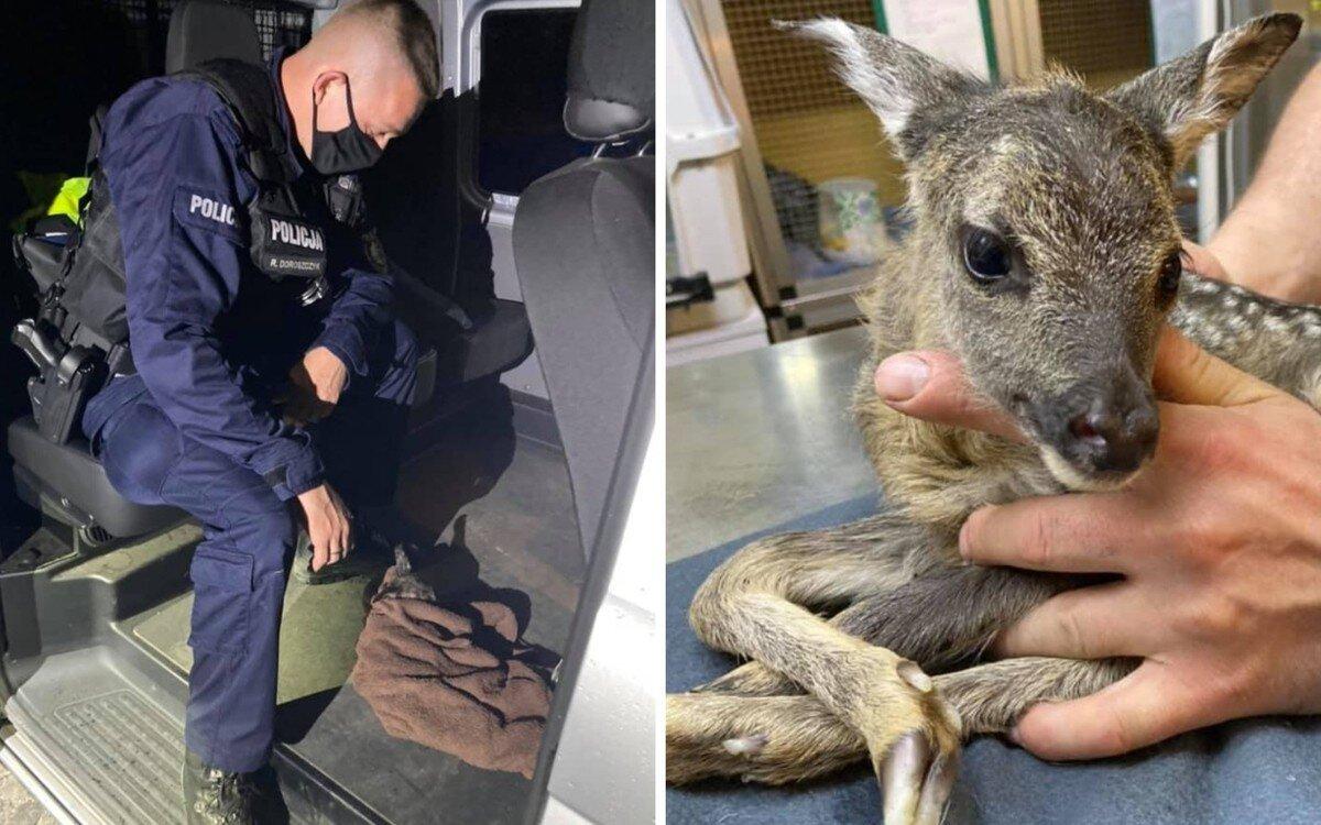 В Польше полицейские спасли новорожденного олененка