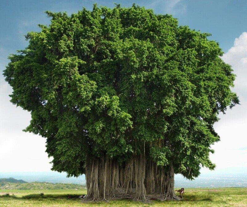 Любопытное о деревьях