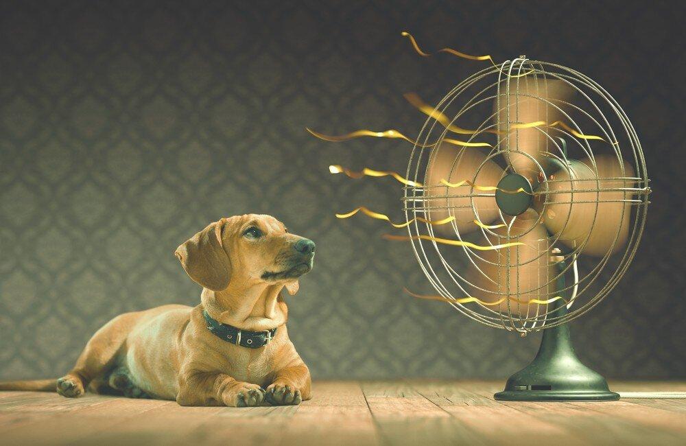 Взаимосвязь жары и самочувствия