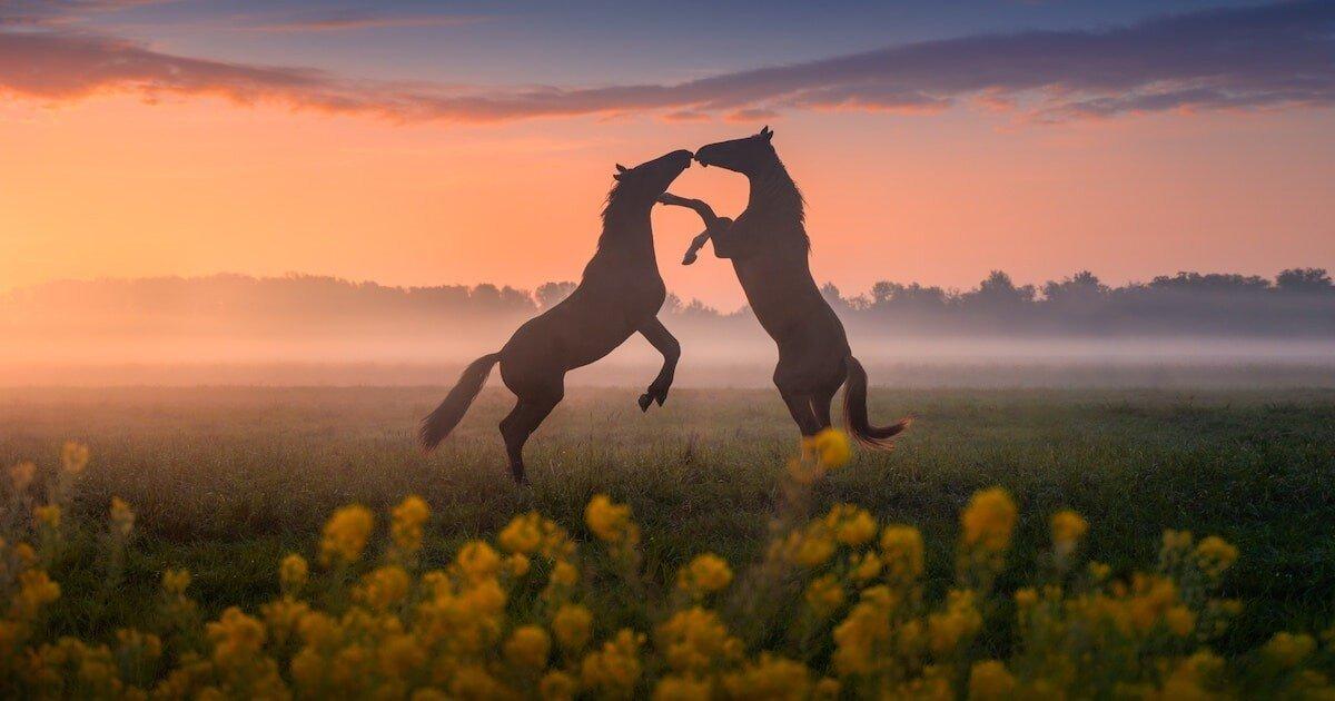 Сказочные фотографии весенних Нидерландов, от которых захватывает дух