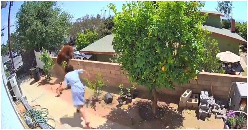Сработала на опережение: женщина защитила своих собак от медведя