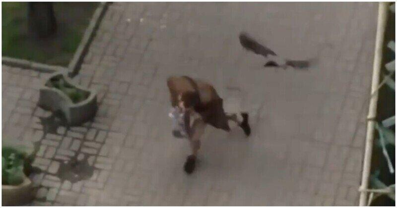 Дерзкие вороны напали на прохожего