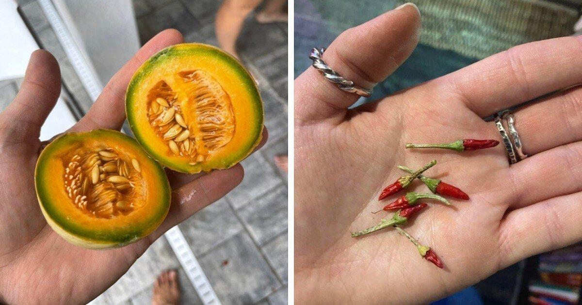 30 случаев, когда люди поделились снимками своего урожая