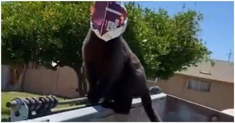 Любопытный кот с пакетом на голове
