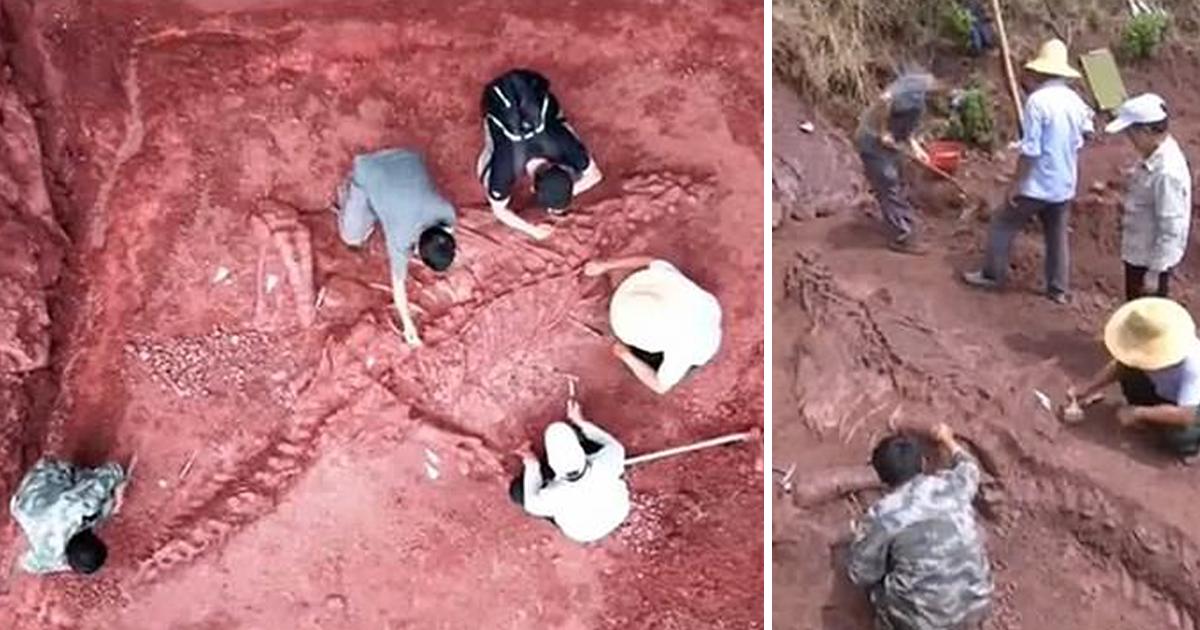 В Китае нашли уникальный скелет гигантского динозавра