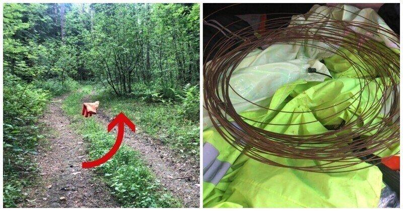 В Подмосковье неизвестный расставил растяжки в лесу. Есть пострадавший