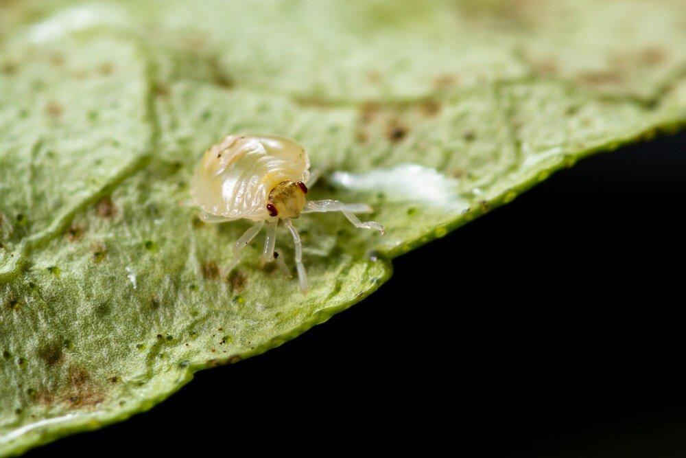 Паутинный клещ на комнатных растениях: причины появления и способы избавления