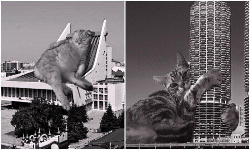 Кошки и брутализм: забавный проект дизайнеров