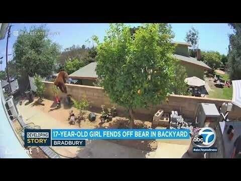 Защищая своих собак, девушка скинула медведицу с забора