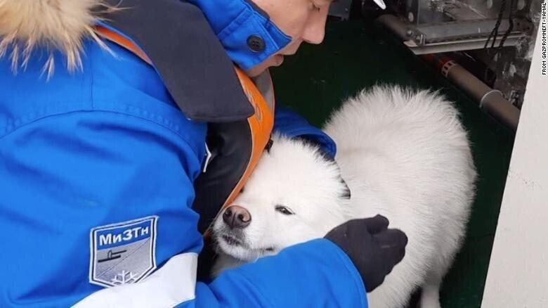 Российские моряки спасли собаку, которая провела неделю на айсберге