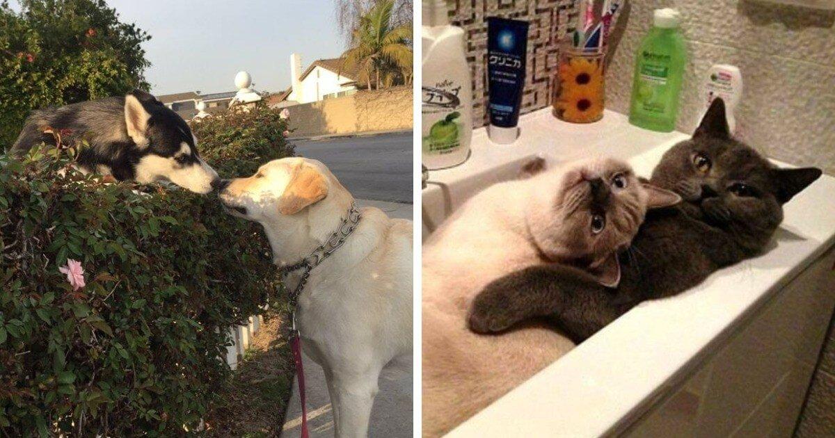 Дружба и романтика: смешные и трогательные фотографии животных