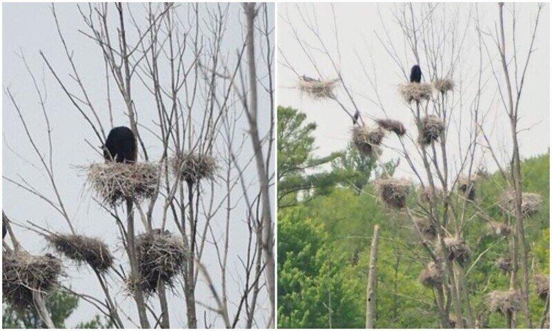 """""""Это мое"""": медведь оккупировал птичье гнездо"""