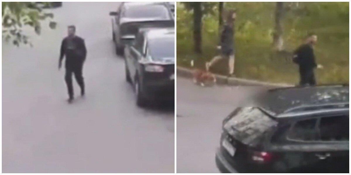 В Петербурге разразился «собачий» конфликт: обидчик получил по голове лопатой