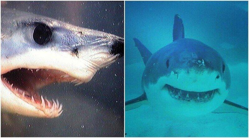 12 фактов об акулах, которые откроют для вас что-то новое