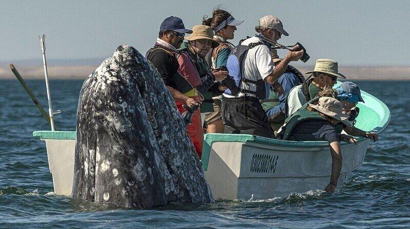 Смешной момент: кит обхитрил туристов и появился прямо у них за спиной