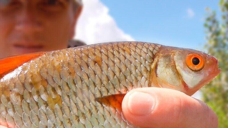 Ловля плотвы на поплавочную удочку после ливня. Рыбалка на поплавок летом 2021