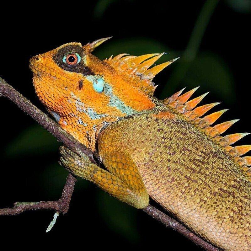Калейдоскоп фото.моделей из мира животных