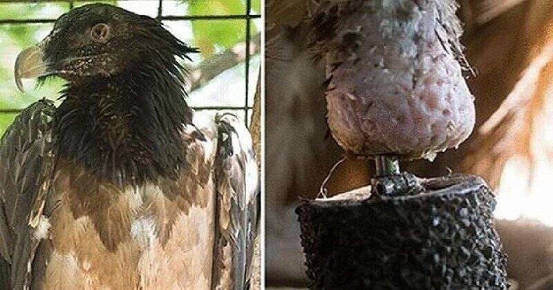 """В австрийском заповеднике появилась первая в мире """"бионическая птица"""""""