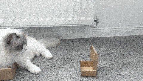 Кошачьи гифки