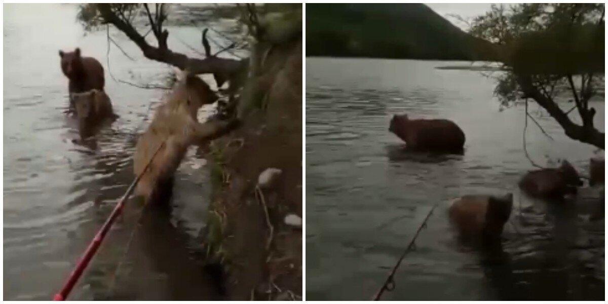 Слабоумие и отвага: россиянин на Камчатке отогнал медведицу с медвежатами удочкой