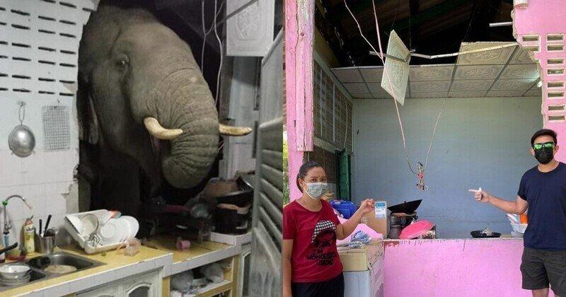 Голодный слон в Таиланде учуял запах еды и сломал стену дома