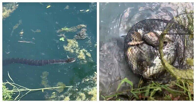 Змея попыталась украсть часть улова рыбака