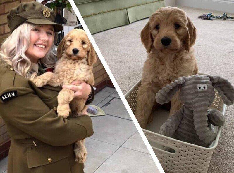 Девушка купила щенка о котором мечтала всю жизнь,но спустя 6 месяцев такого сюрприза никто не ожидал