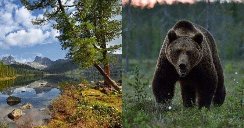 Медведь-людоед в Сибири загрыз подростка, помогавшего туристам
